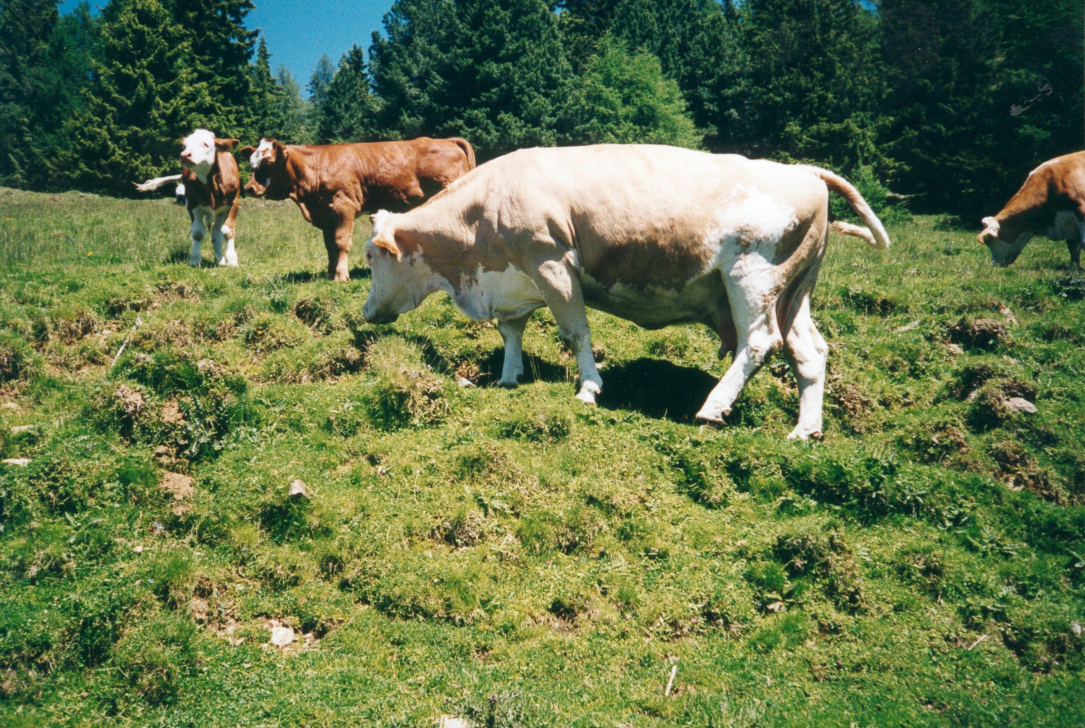 40 2011 extensive almweiden