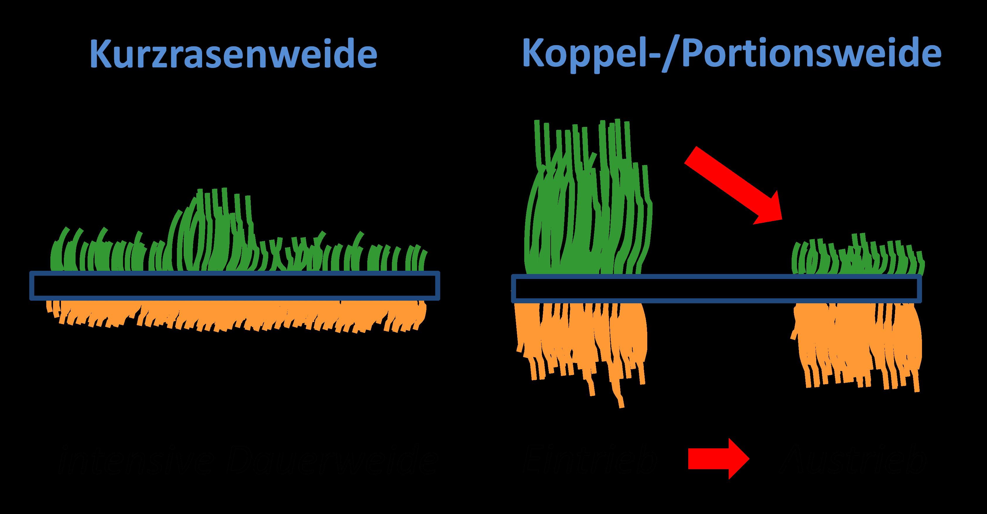 Abbildung: Auch die Wurzeln sind wichtig! Im Forschungsprojekt werden zwei bedeutende Weidesysteme am Bio-Institut der HBLFA Raumberg-Gumpenstein umfassend untersucht